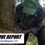 The Raw Material of Rubber is Causing the Price of Gloves and Tires to Rise